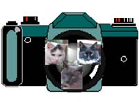Three Kitty Photo Logo
